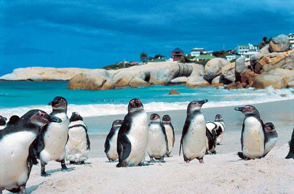 Boulders-Beach-South-Africa1
